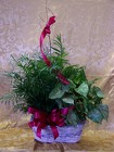 Plants-Double Garden Basket from Backstage Florist in Richardson, Texas