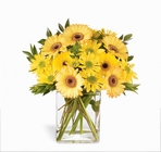 Morning Joy Bouquet Yellow Daisy Mix from Backstage Florist in Richardson, Texas