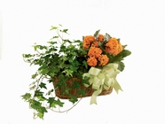 Kalanchoe & Ivy Planter from Backstage Florist in Richardson, Texas