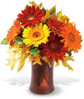 Autumn Gerberas from Backstage Florist in Richardson, Texas