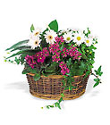 Traditional European Garden Basket from Backstage Florist in Richardson, Texas