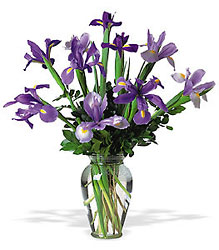 Incredible Iris from Backstage Florist in Richardson, Texas